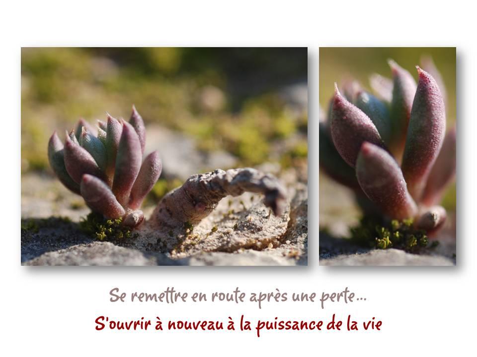 Nature_divers_adaptation_02