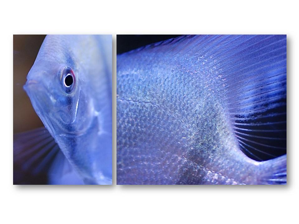 Nature_faune_aquarium_02