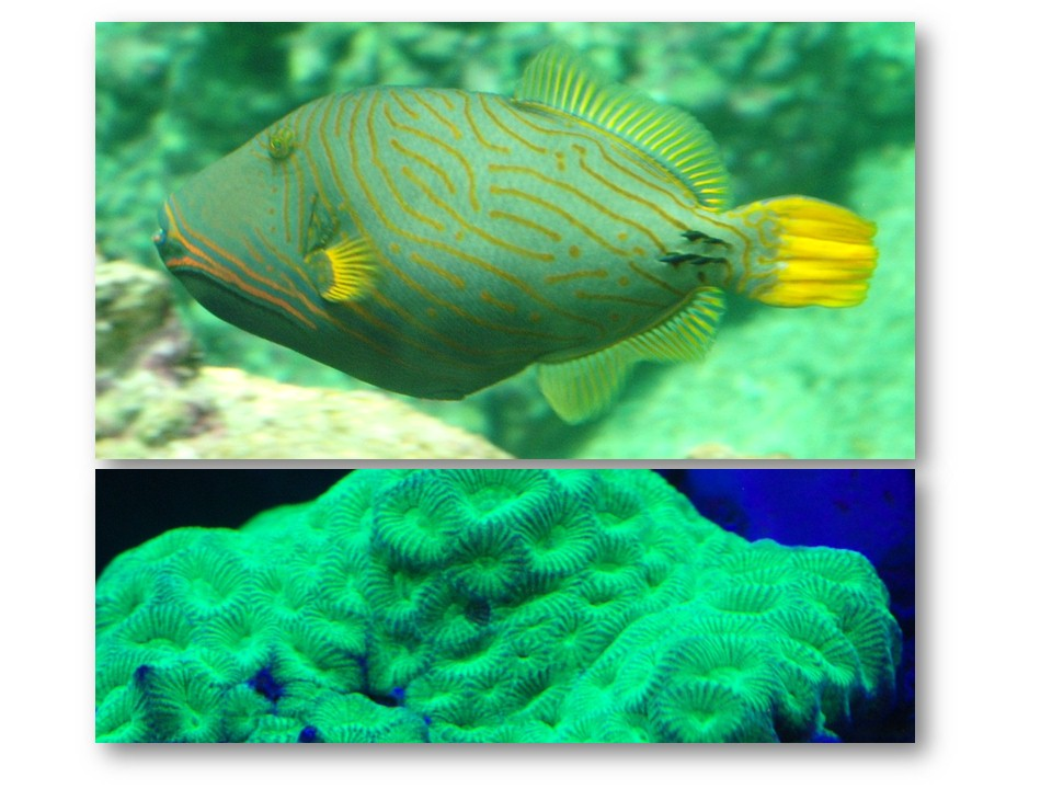 Nature_faune_aquarium_04