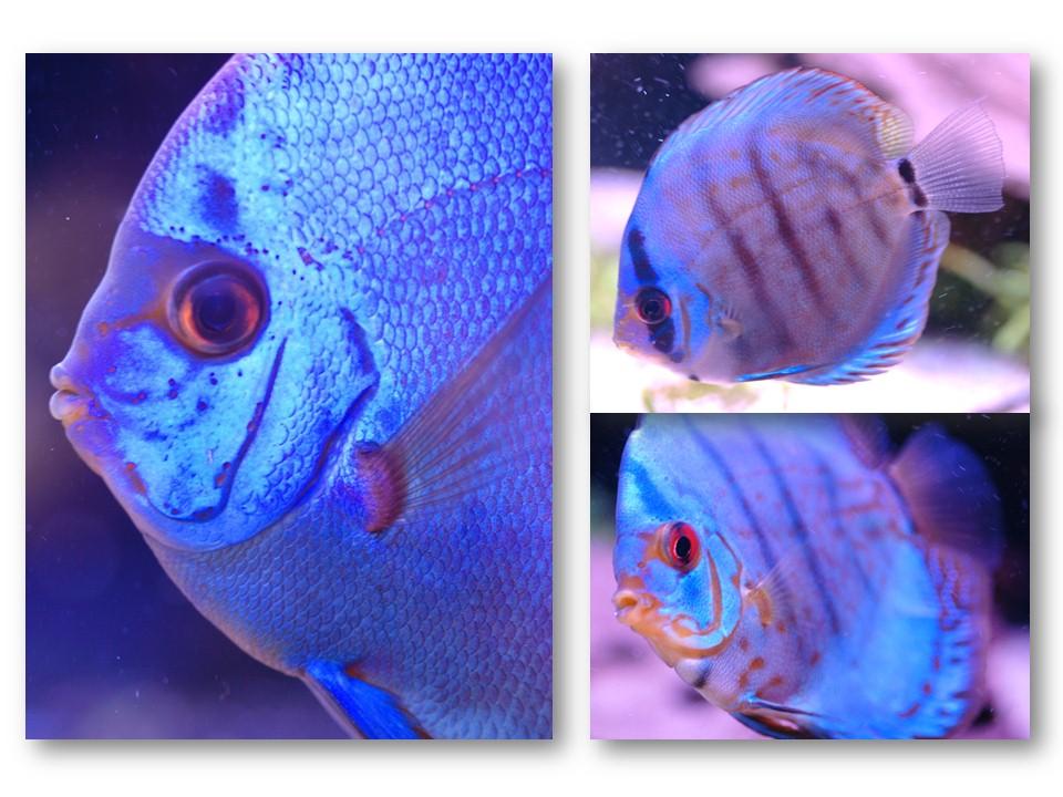 Nature_faune_aquarium_06
