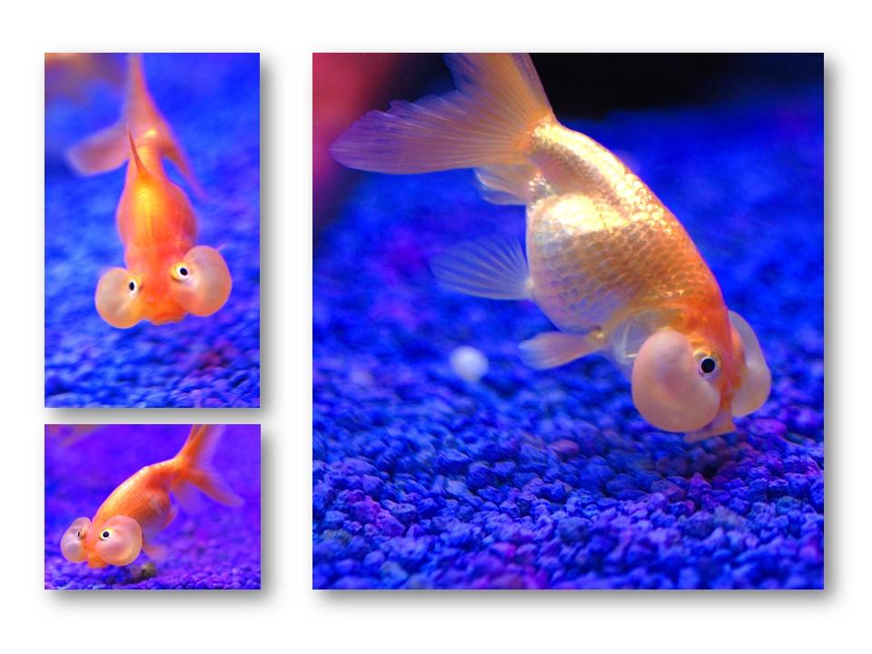 Nature_faune_aquarium_10