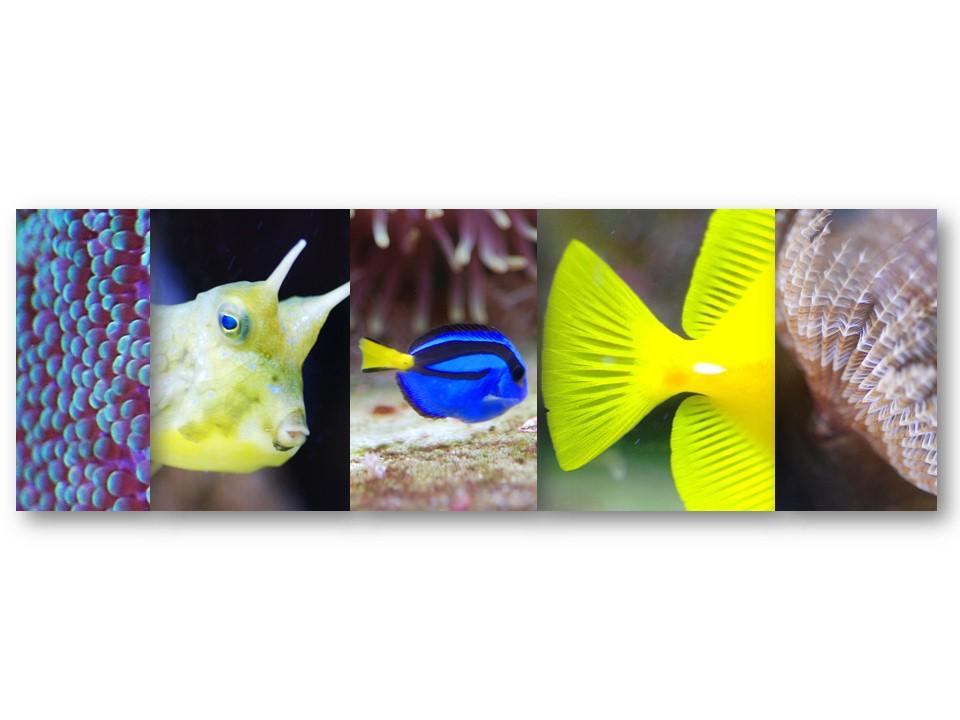 Nature_faune_aquarium_11