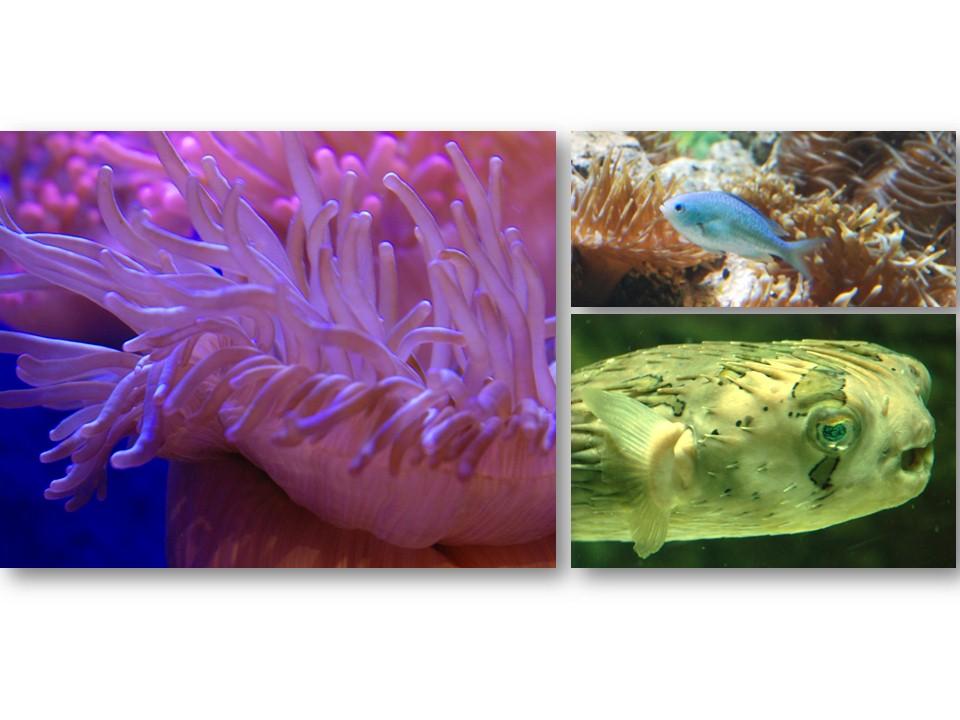 Nature_faune_aquarium_12