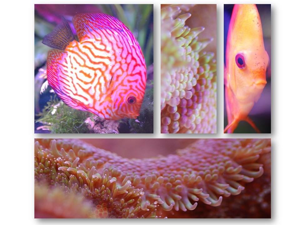 Nature_faune_aquarium_13