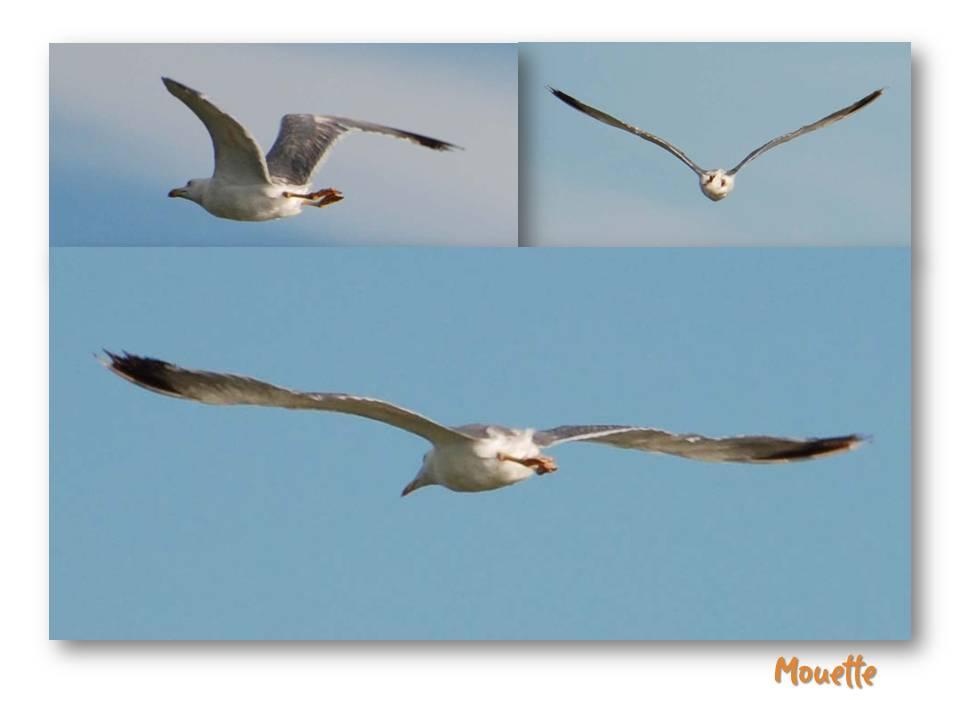Nature_faune_oiseaux_08