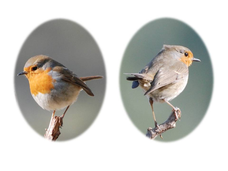 Nature_faune_oiseaux_02