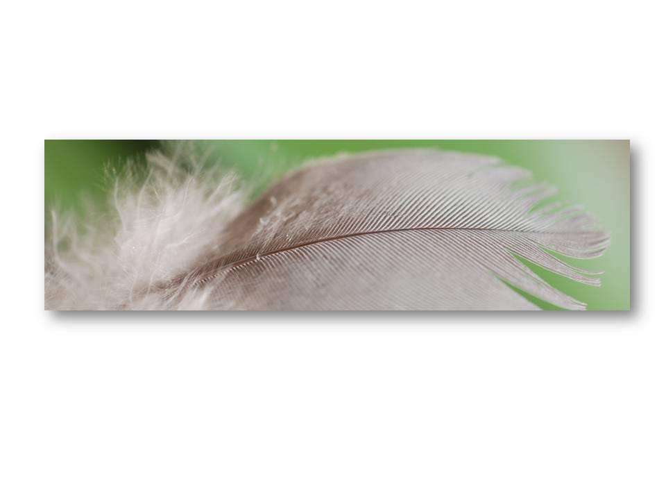 Nature_faune_oiseaux_04