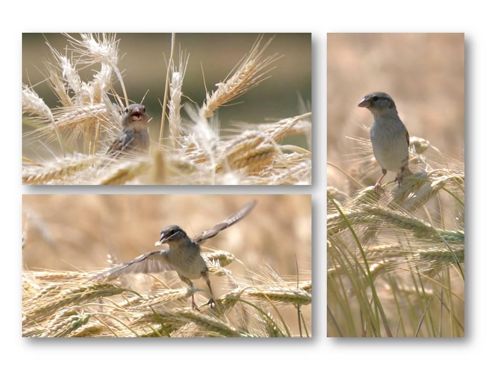 nature_faune_oiseaux_07