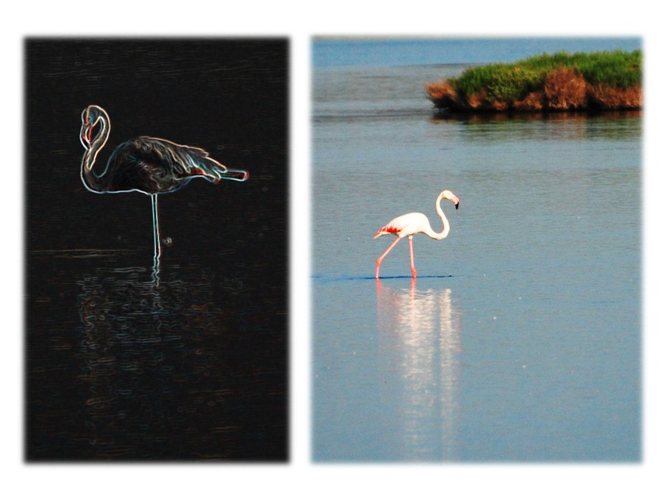 nature_faune_oiseaux_10