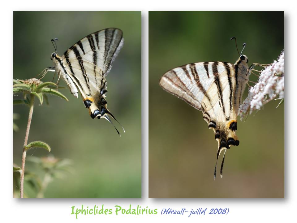 Nature_faune_papillon_01