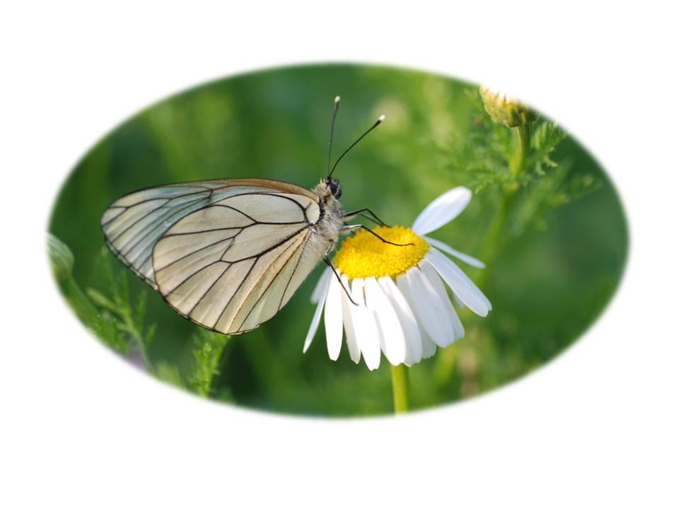 Nature_faune_papillon_02