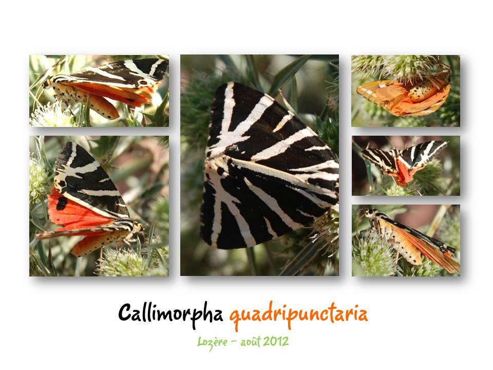 Nature_faune_papillon_05