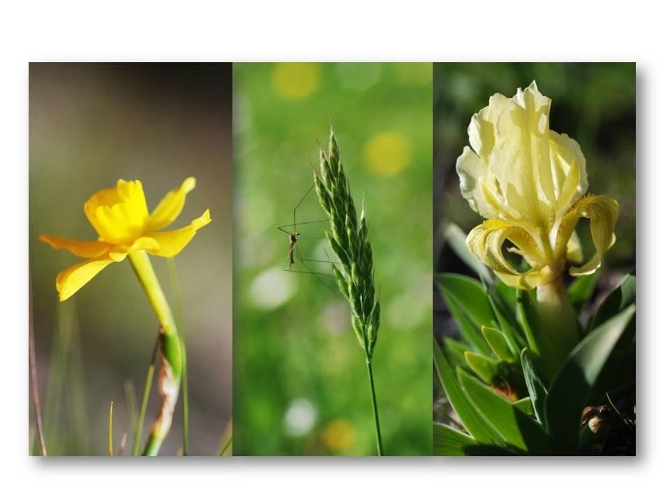 Nature_faune_printemps_04