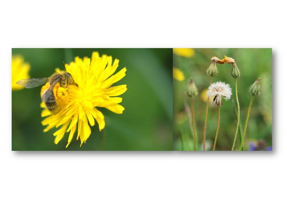 nature_faune_printemps_10