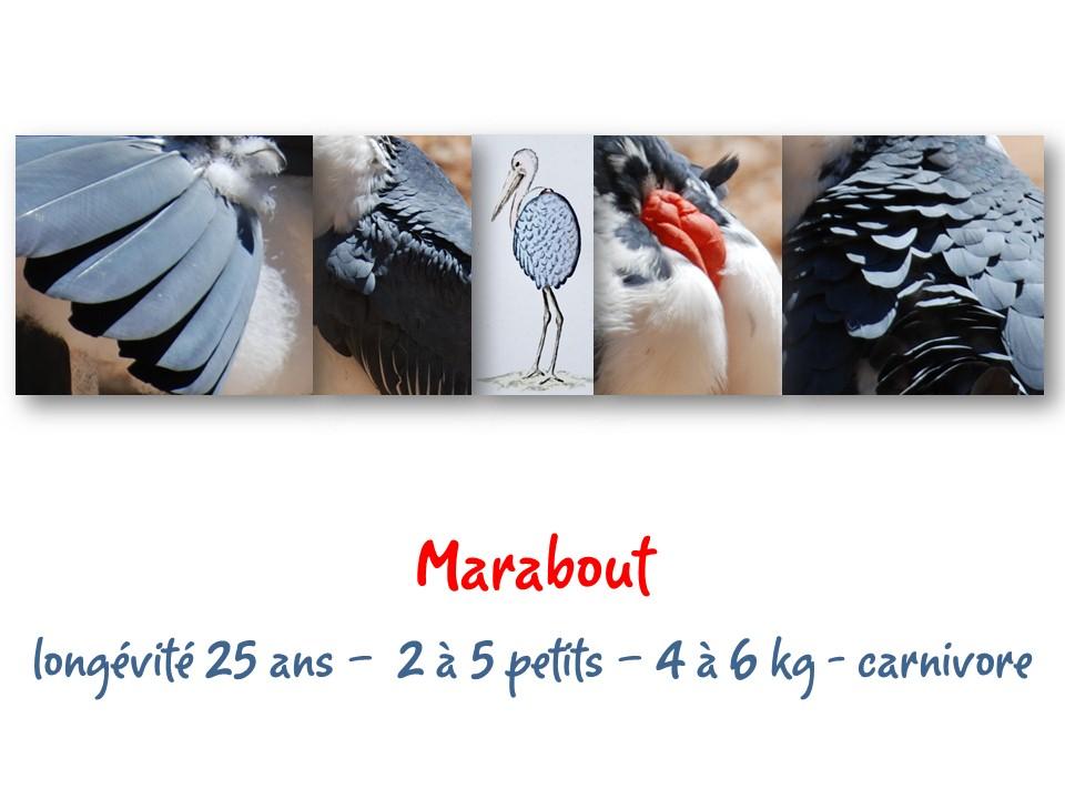 Nature_faune_zoo_42