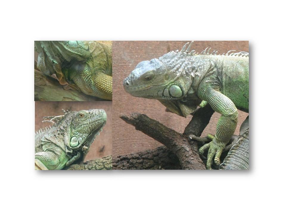 Nature_faune_zoo_45