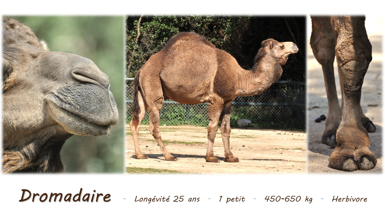 Nature_faune_zoo_61