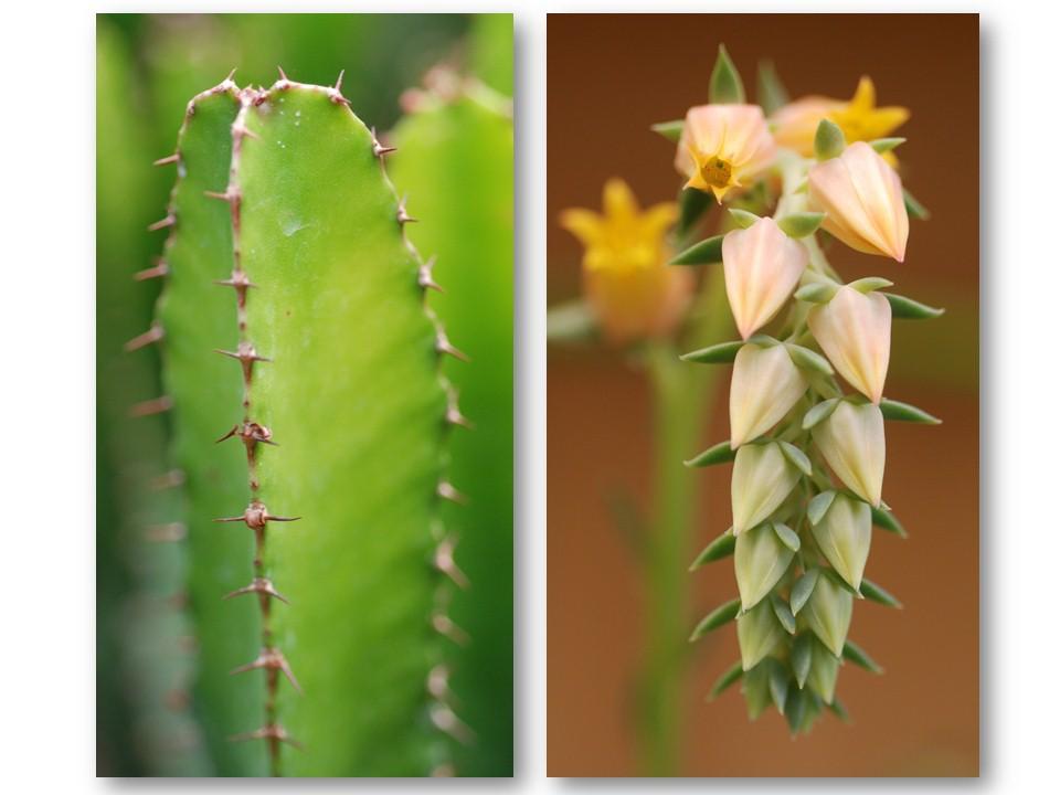 nature_flore_cactus_02