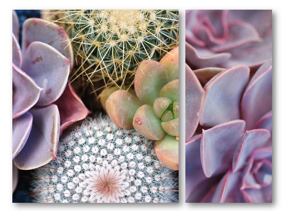nature_flore_cactus_05