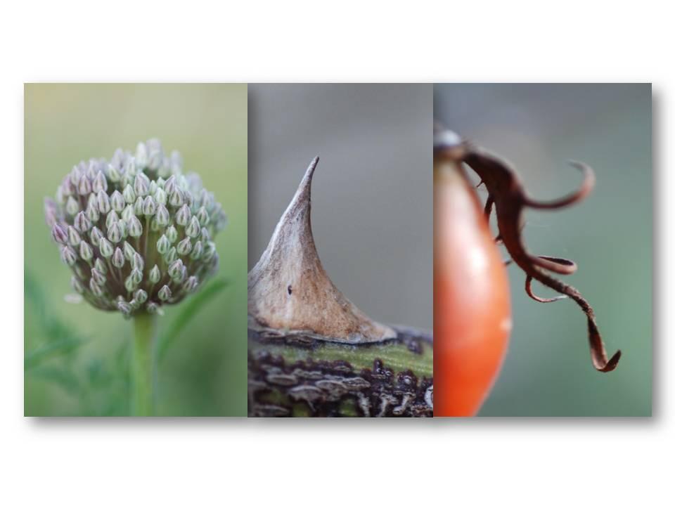 Nature_flore_champs_09