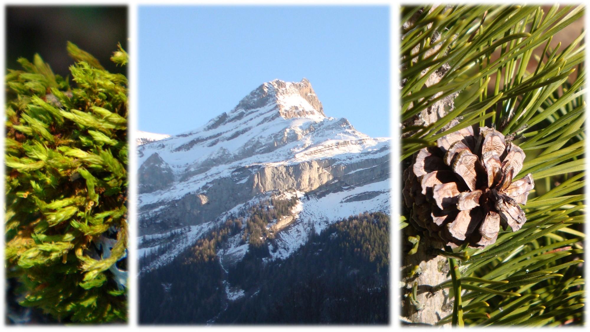 nature_flore_montagne_06