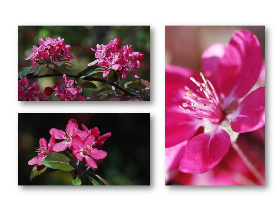 Nature_flore_printemps_03