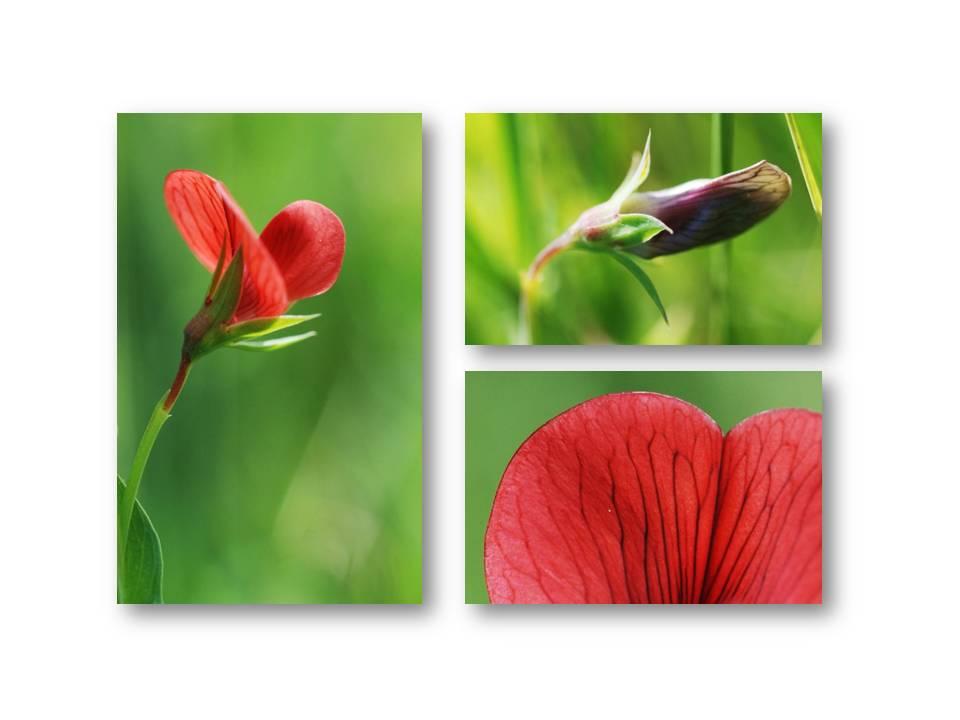 Nature_flore_printemps_07