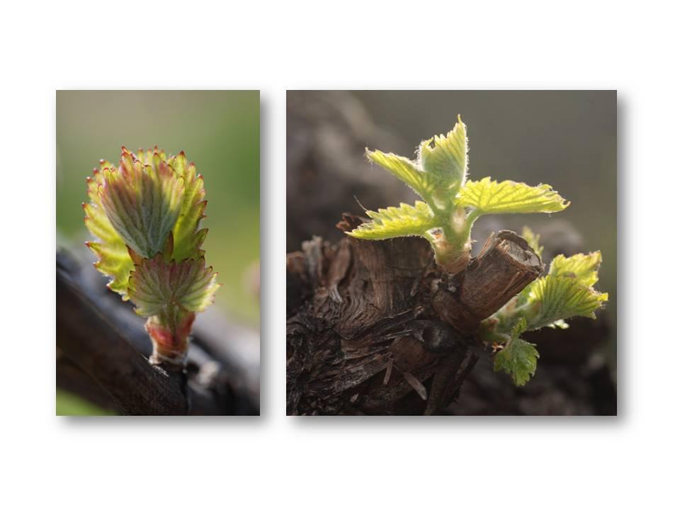 Nature_flore_printemps_08
