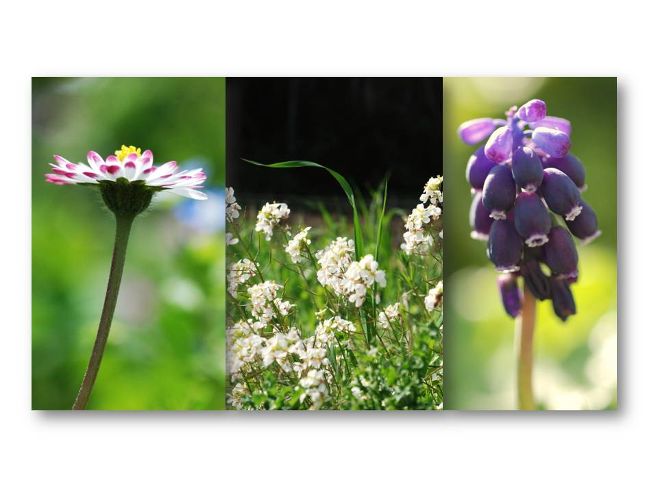Nature_flore_printemps_09