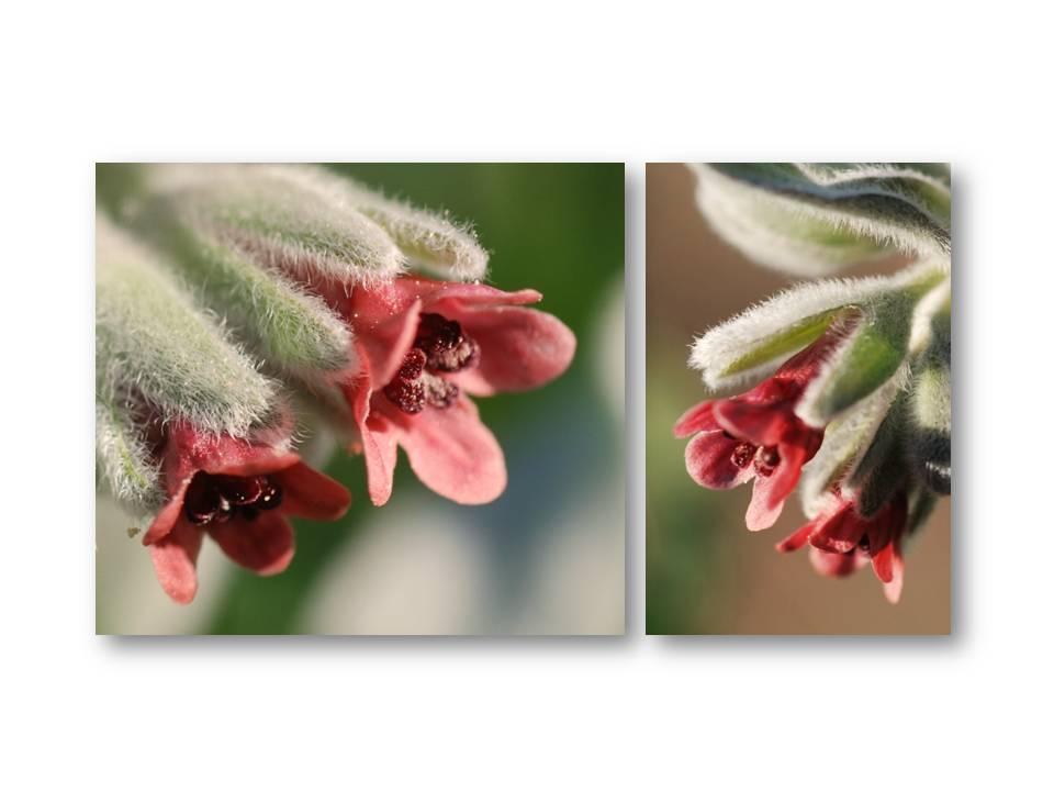 Nature_flore_printemps_10