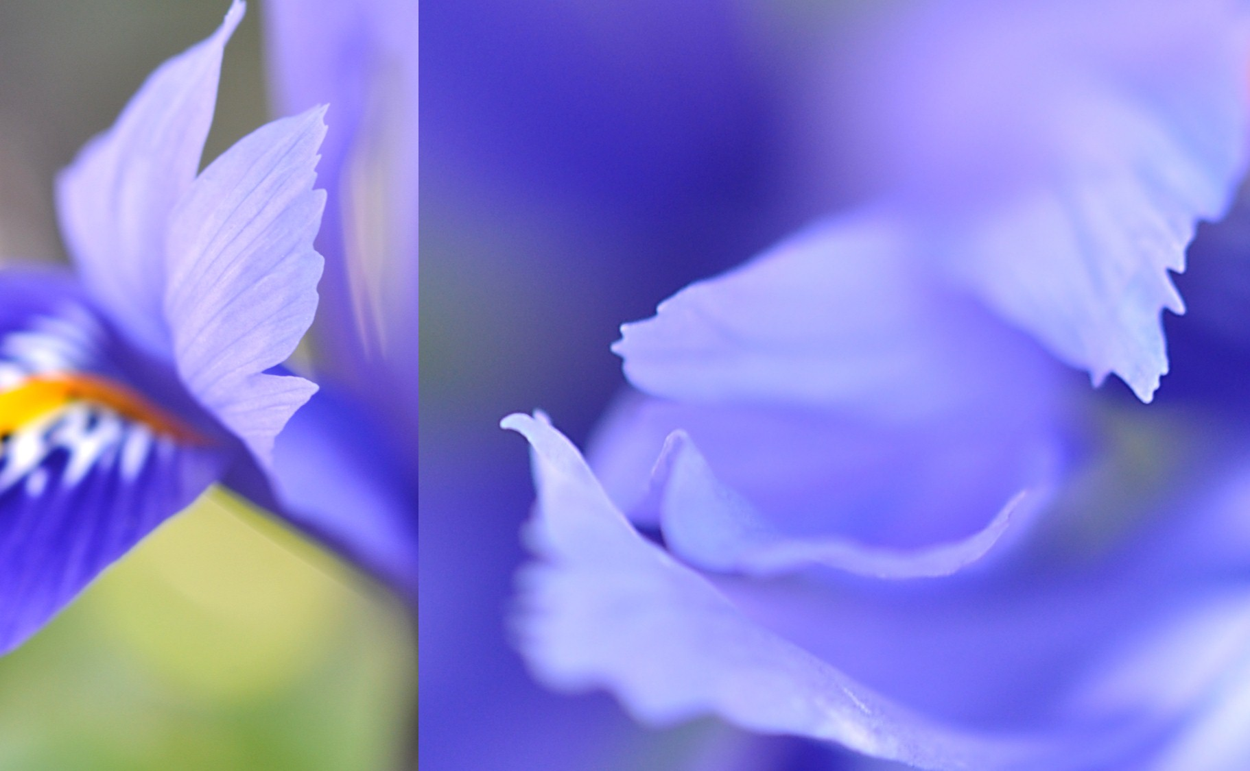 Nature_flore_printemps_32