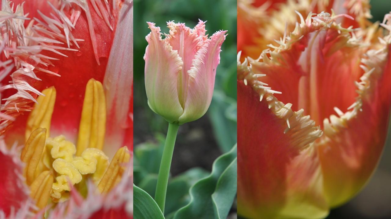 Nature_flore_printemps_38