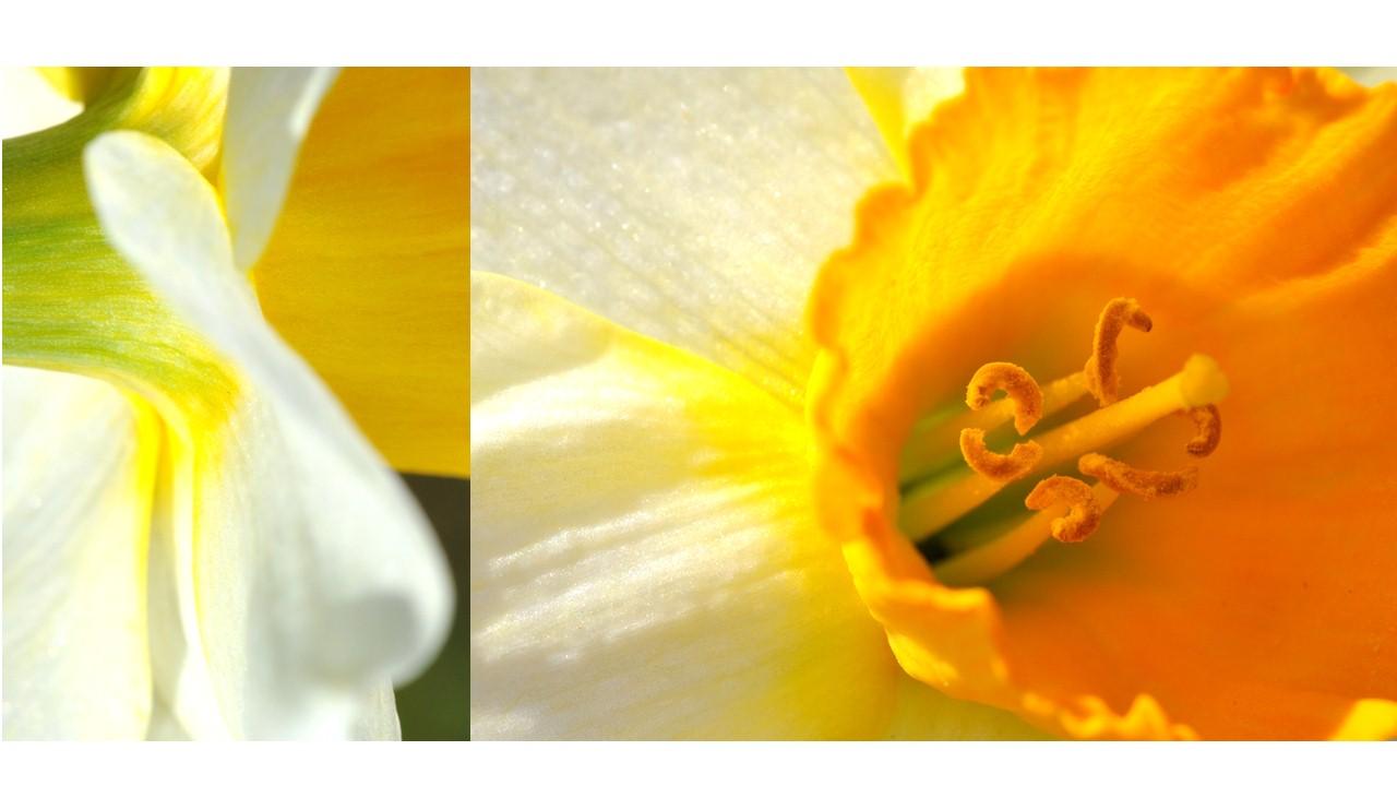 Nature_flore_printemps_42