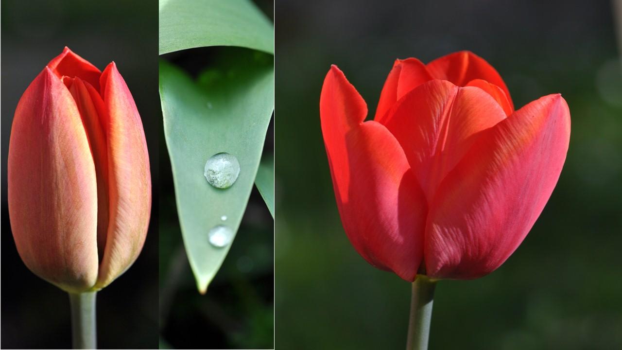 Nature_flore_printemps_43