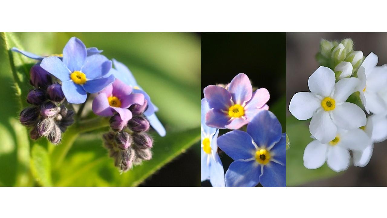 Nature_flore_printemps_47