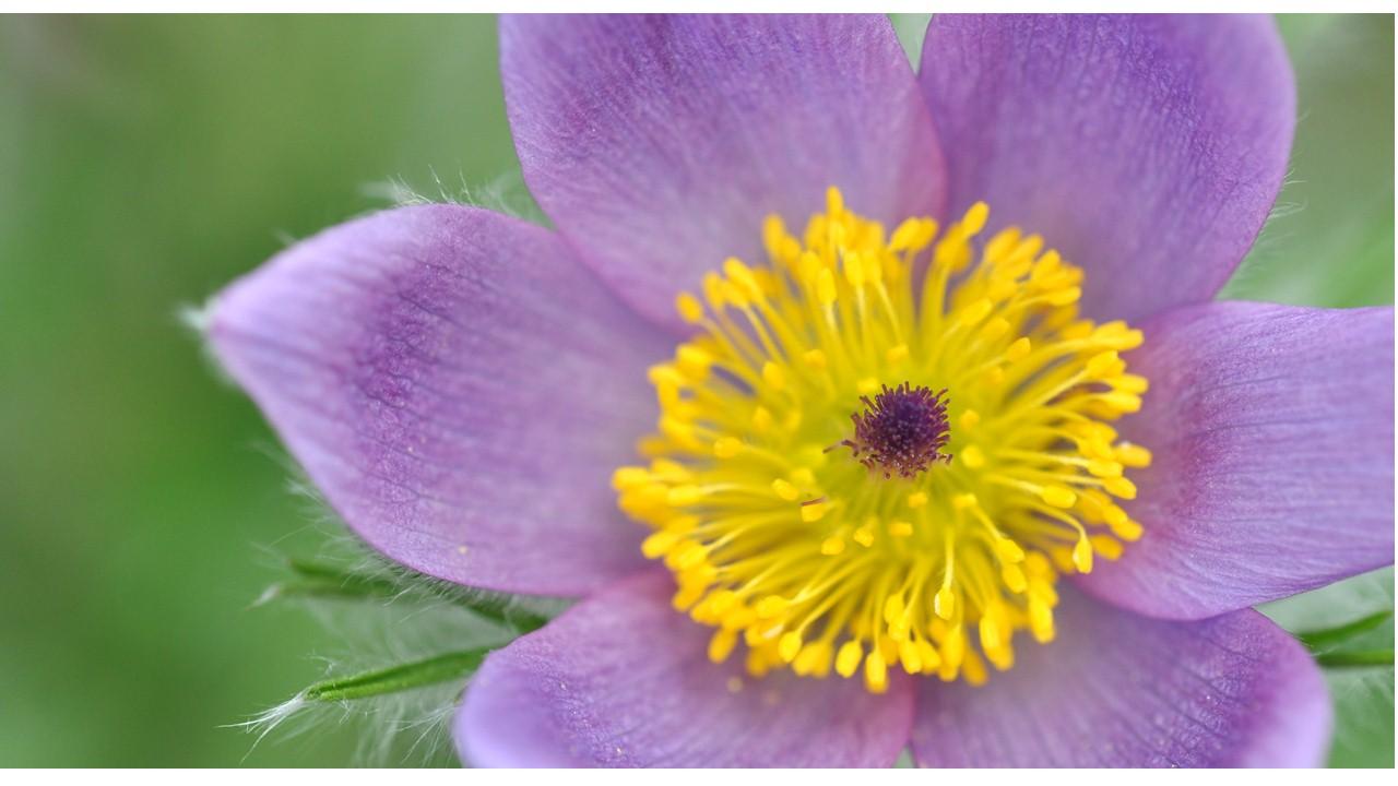 Nature_flore_printemps_54