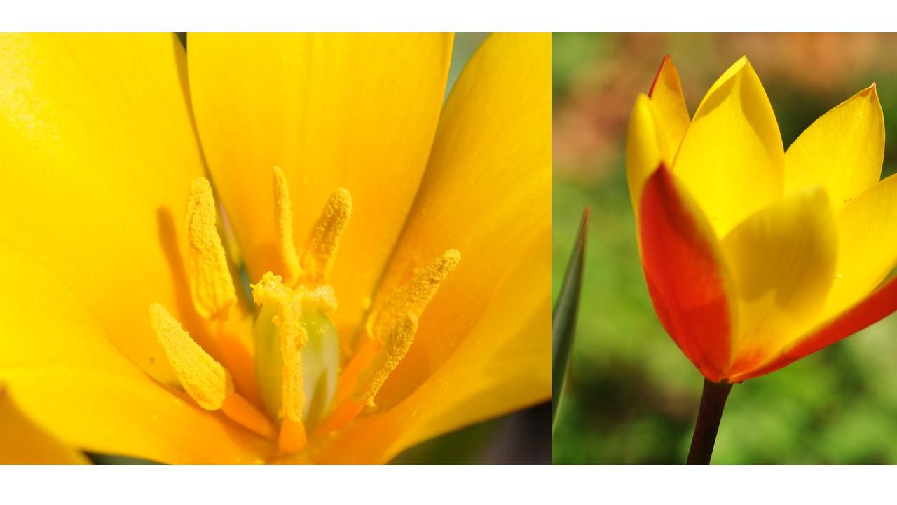 Nature_flore_printemps_57