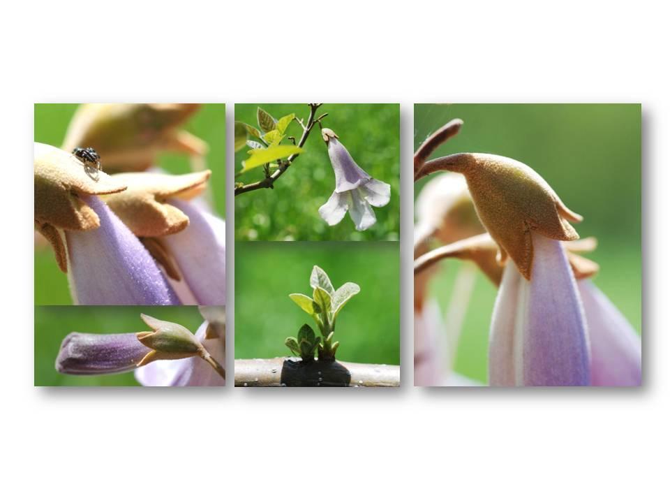 nature_flore_printemps_11