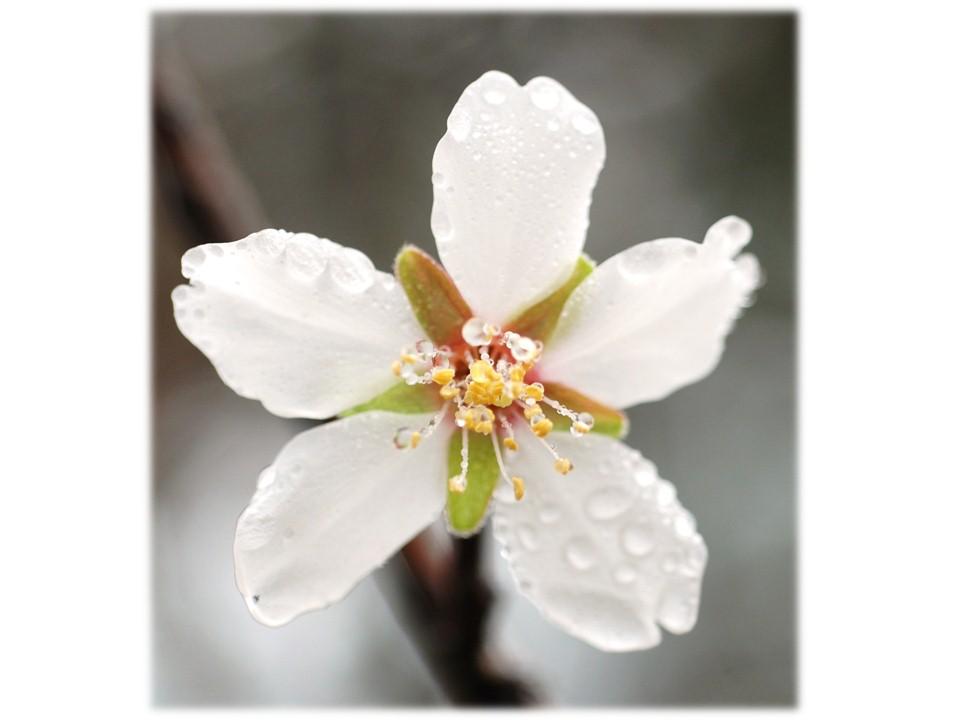 nature_flore_printemps_28