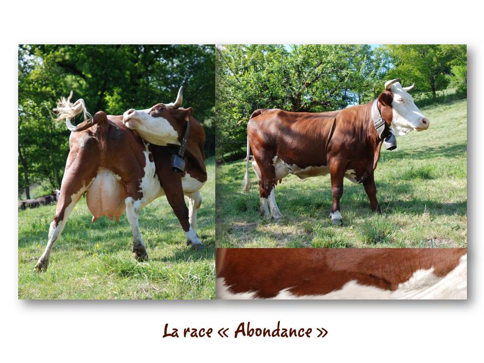 Rencontre_partage_fromage_08