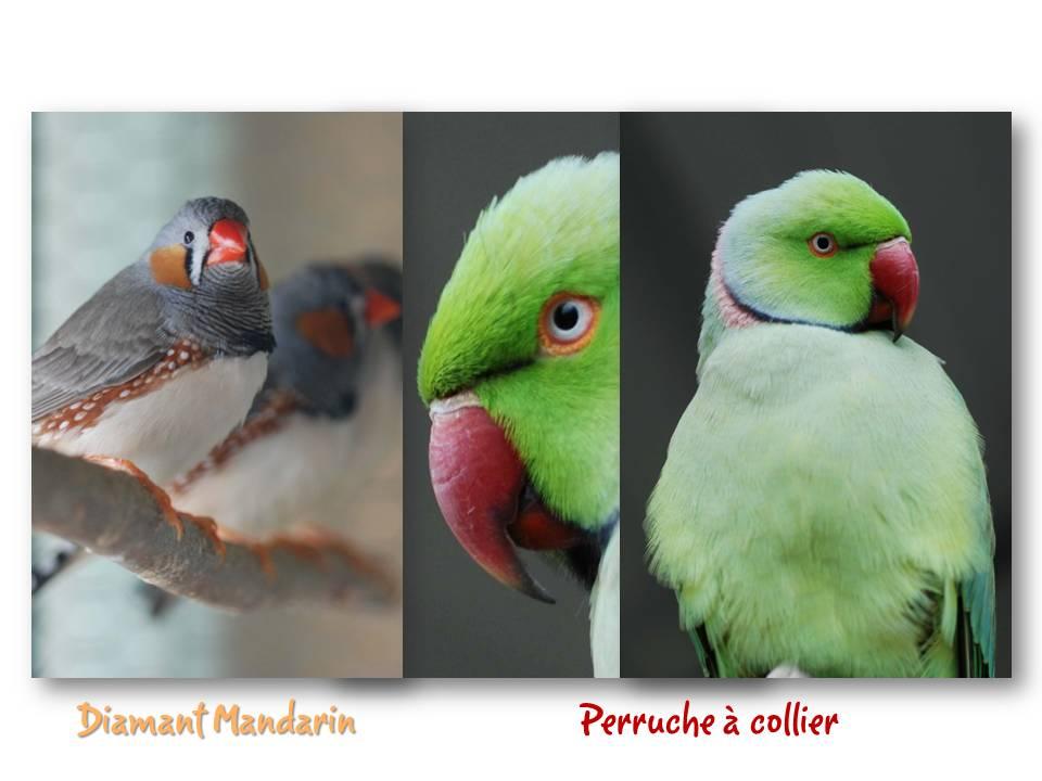Rencontre_partage_oiseaux_08