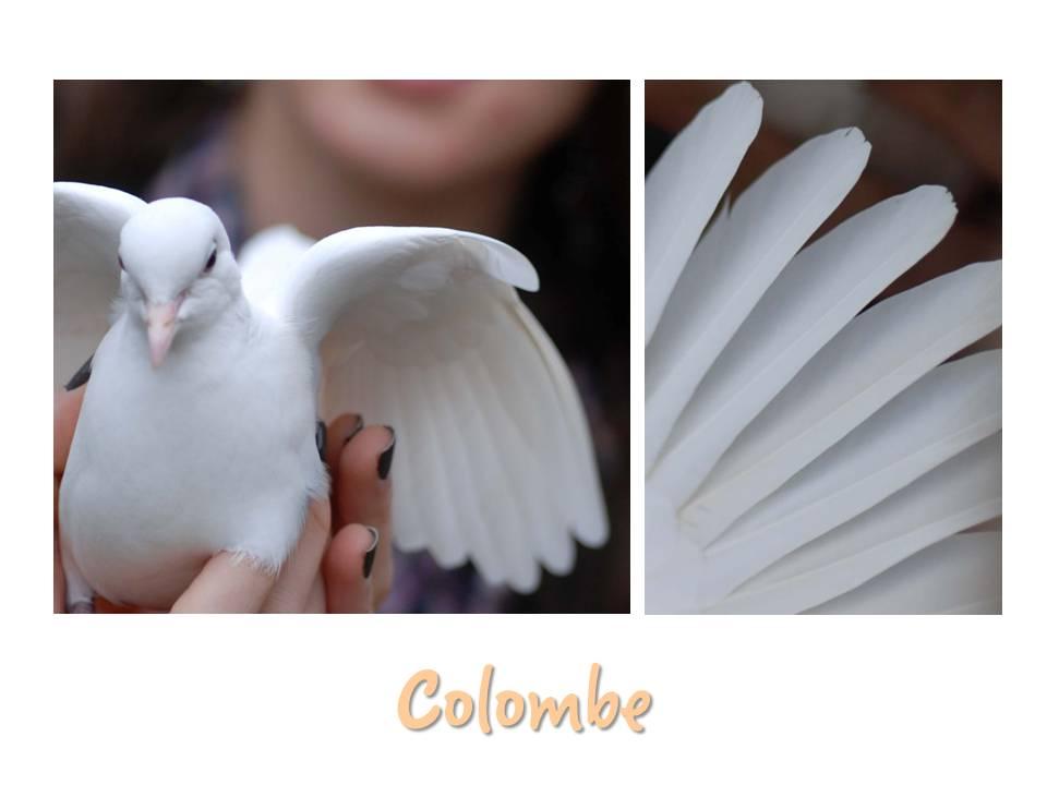 Rencontre_partage_oiseaux_09