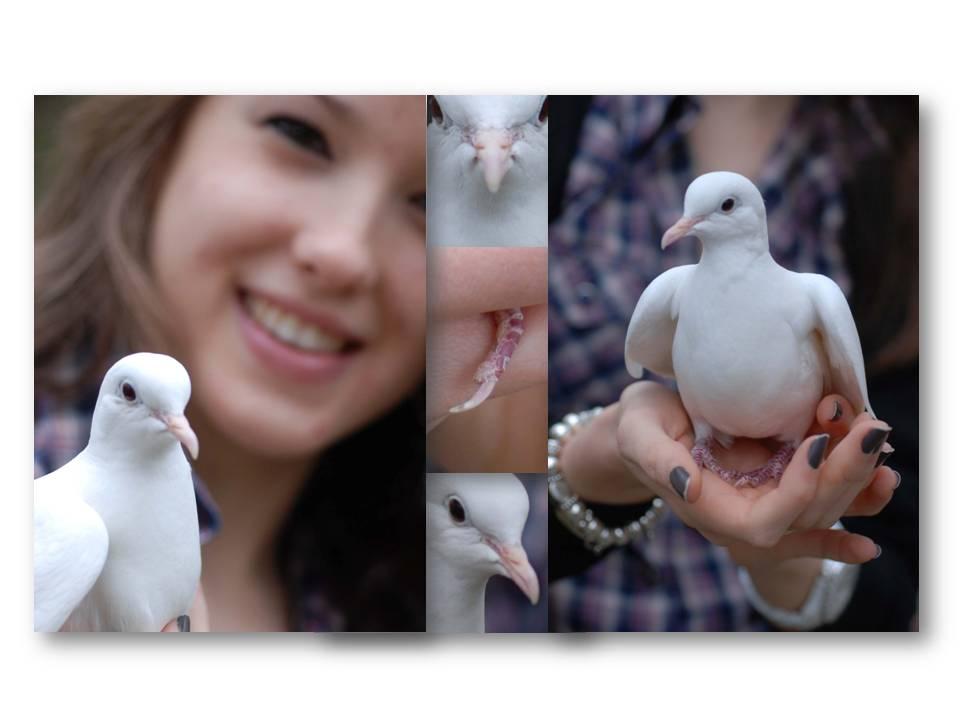 Rencontre_partage_oiseaux_10